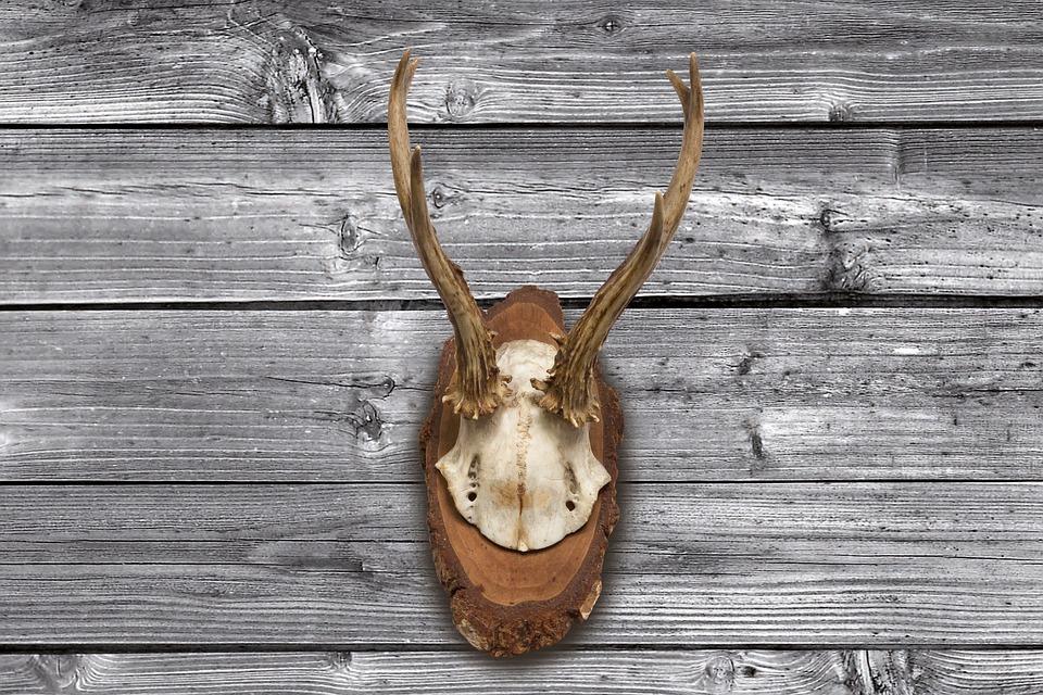 Antler, Horn, Hunting, Hunting Trophy, Retro, Red Deer