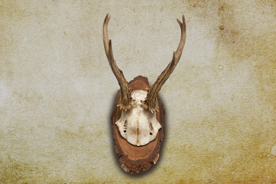 Antler, Horn, Hunting, Hunting Trophy, Retro, Red Deer