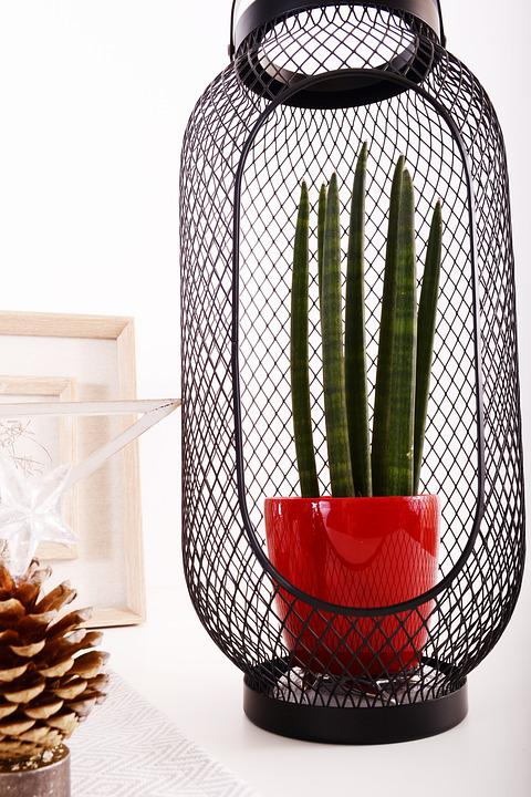 Decoration, Flowerpots, Flower, Red, Interior, Design