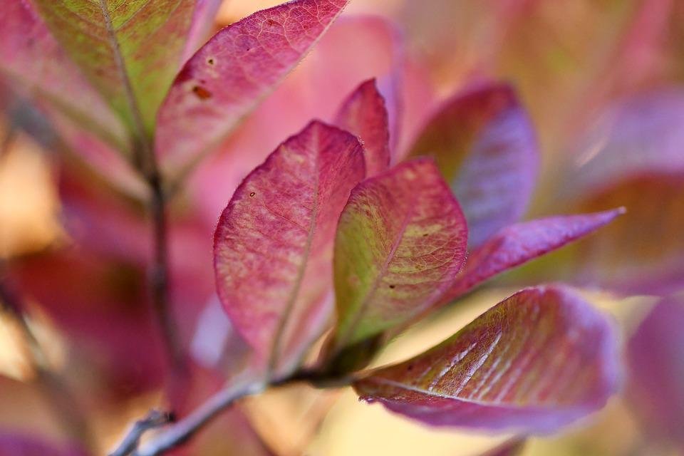 Leaves, Plant, Colorful, Autumn, Discolored, Red