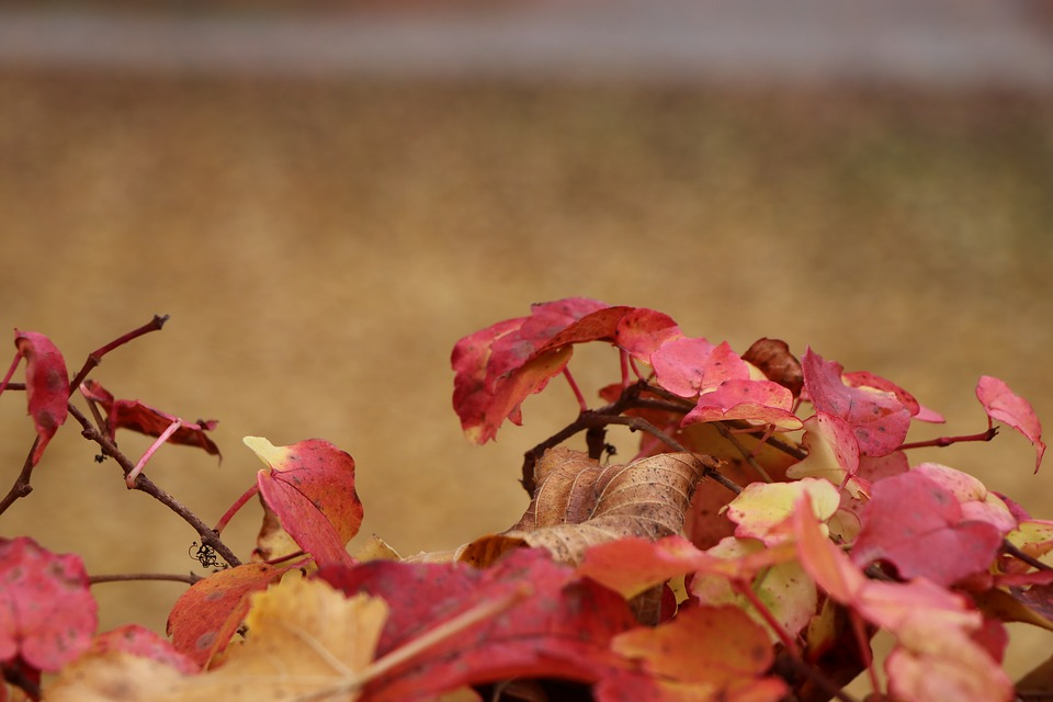 Autumn, Colorful, Red, Leaves, Leaf, Fall Foliage