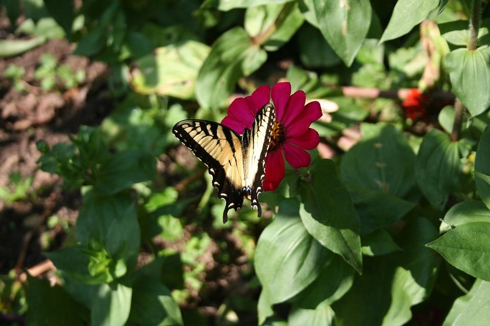 Butterfly, Garden, Red Flower