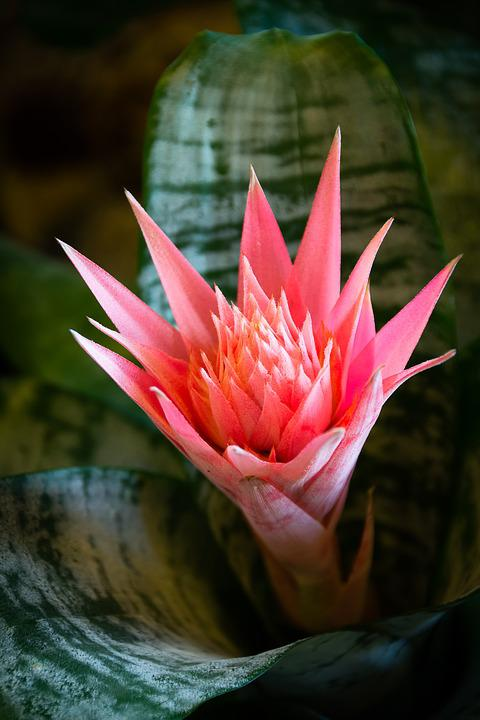 Red Flower, Cactus, Botanical Garden, Light, Greenhouse