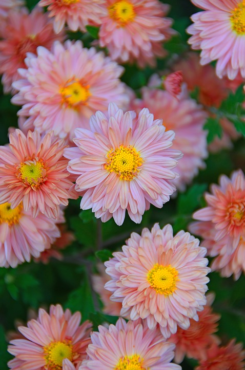 Red, Red Flower, Fall Flowers, Perennial Flowers