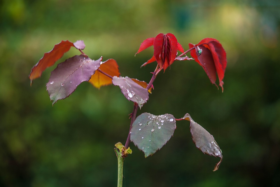 Garden, Flower, Red, Wallpapr, Flower Garden, Autumn