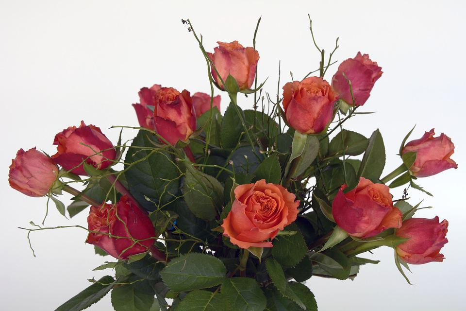 Roses, Rose Flower, Flowers, Red, Orange, Green, Flower