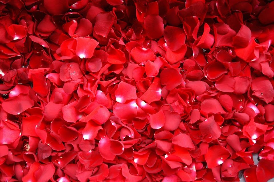 Geranium, Red, Flower, Flowers, Nature, Red Flowers