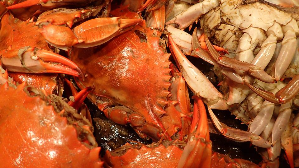 Seafood, Crabs, Cooking, Food, Shellfish, Red, Boil