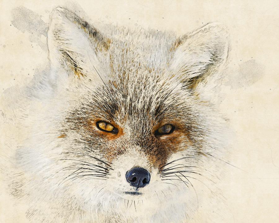 Red Fox, Animal, Photo Art, Head, Canine, Mammal