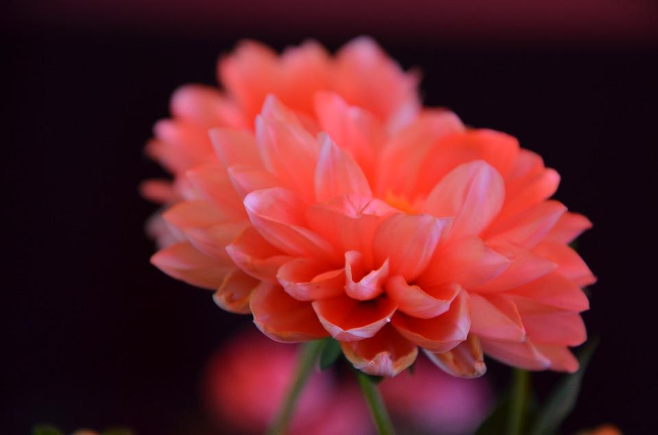 Flowers, Red, Garden