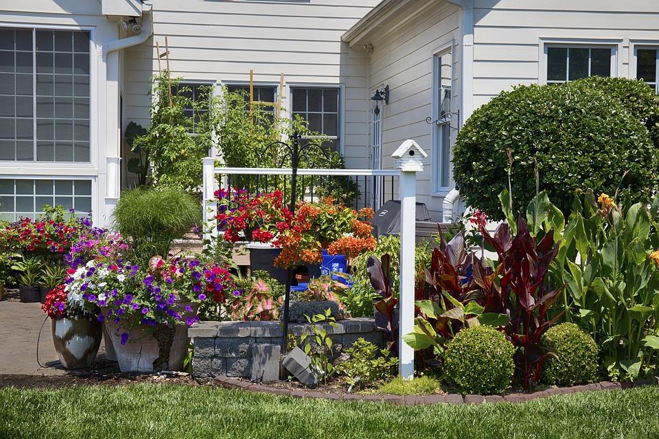 Backyard, Flowers, Garden, Green, Red, White