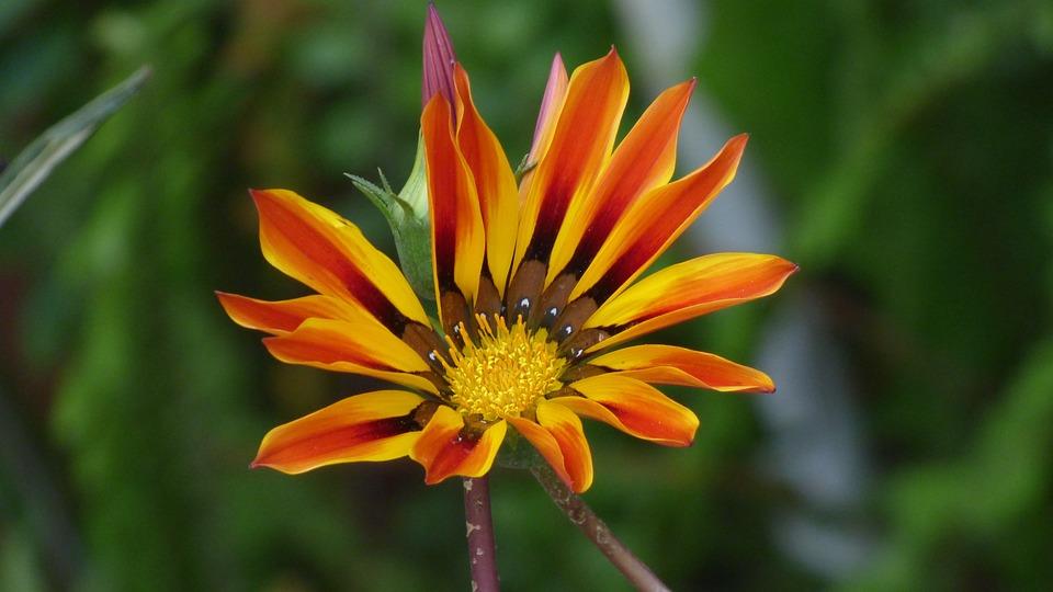 Flower, Petals, Colors, Yellow, Red, Garden, Nature