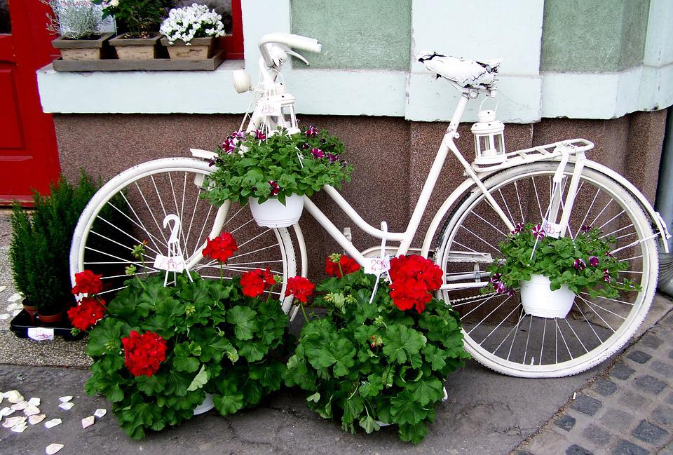 Old White Bicycle, Red Geranium, Romanticism