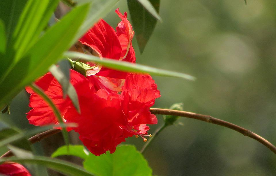 Green, Red, Nature, Colorful, Leaf, Spring