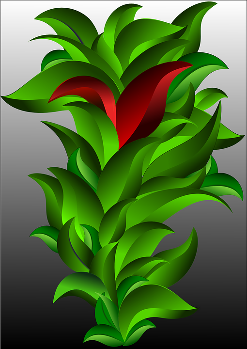 Leaves, Plant, Vegetables, Red, Green, Nature