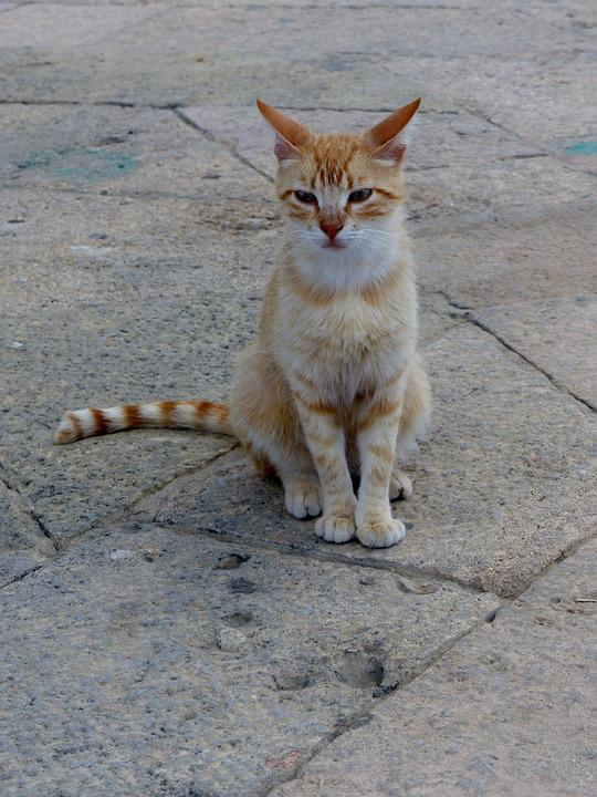 Alley Cat, Strays, Red Head