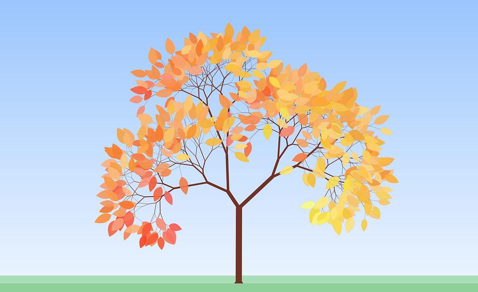 Autumn, Tree, Fall, Leaves, Red, Orange, Foliage