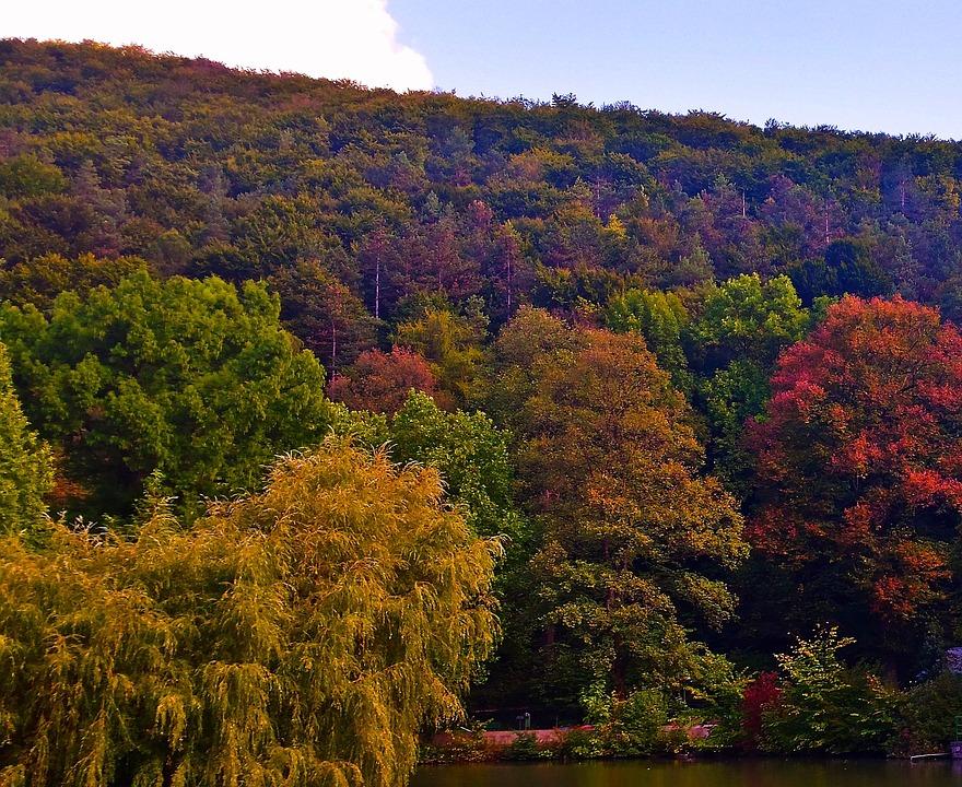 Autumn, Nature, Colorful, Foliage, Trees, Red, Orange