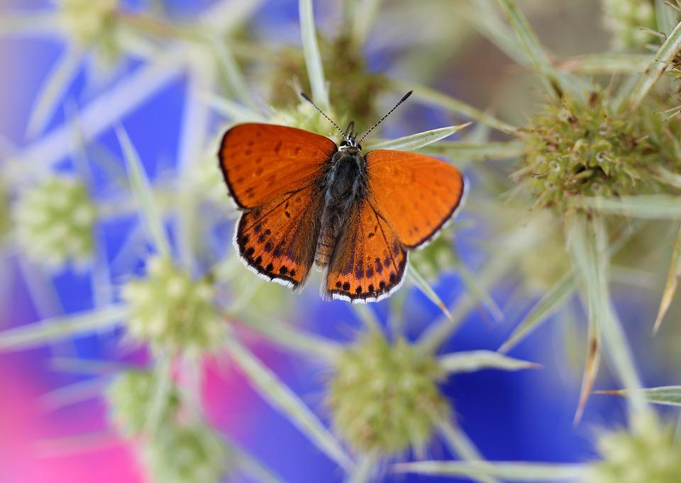 Butterfly, Red, Insecta, Wings, Nature, Coloring