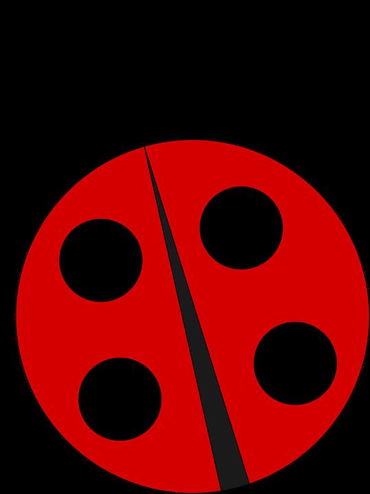 Ladybug, Ladybird, Nature, Insect, Bug, Beetle, Red