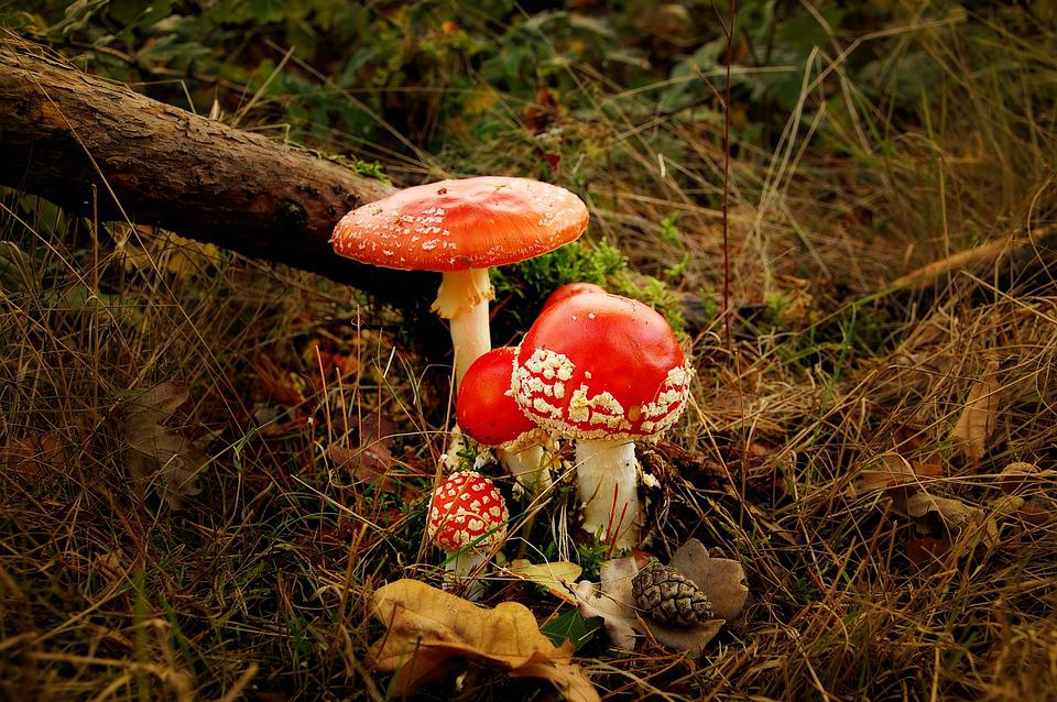Matryoshka, Forest, Nature, Toxic, Red, Mushroom