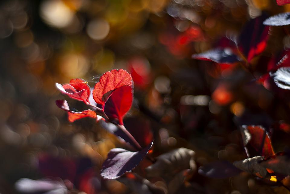 Autumn, Colors, Leaf, Nature, Colorful, Red, Plant