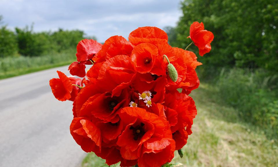 Well-liked Free photo Red Poppy Flower Bouquet Wild Flowers - Max Pixel AX81