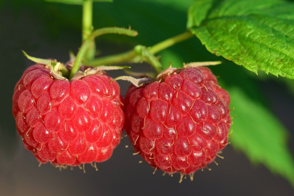 Raspberry, Fruit, Berry, Red, Ripe, Leave