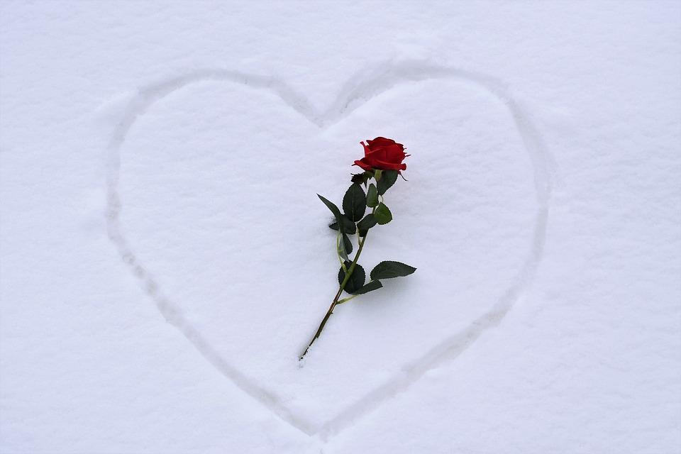Heart In Snow, Red Rose, Love Symbol, White, Romance