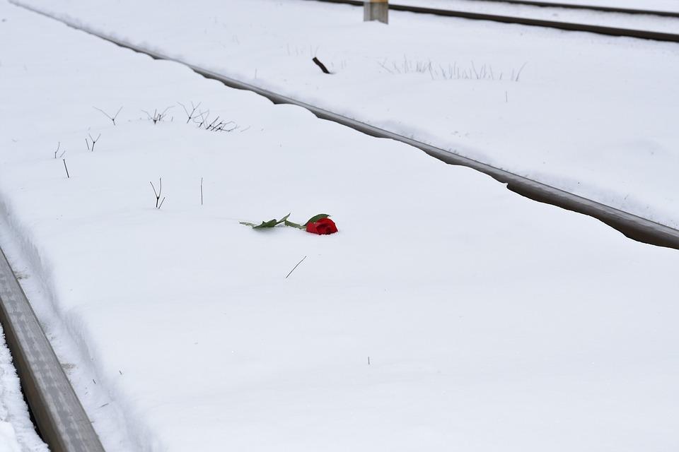 Red Rose In Snow, Eternal Love Symbol, Railway