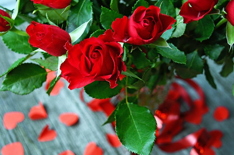 Rose, Rose Petals, Red Rose, Romantic, Love, Romance