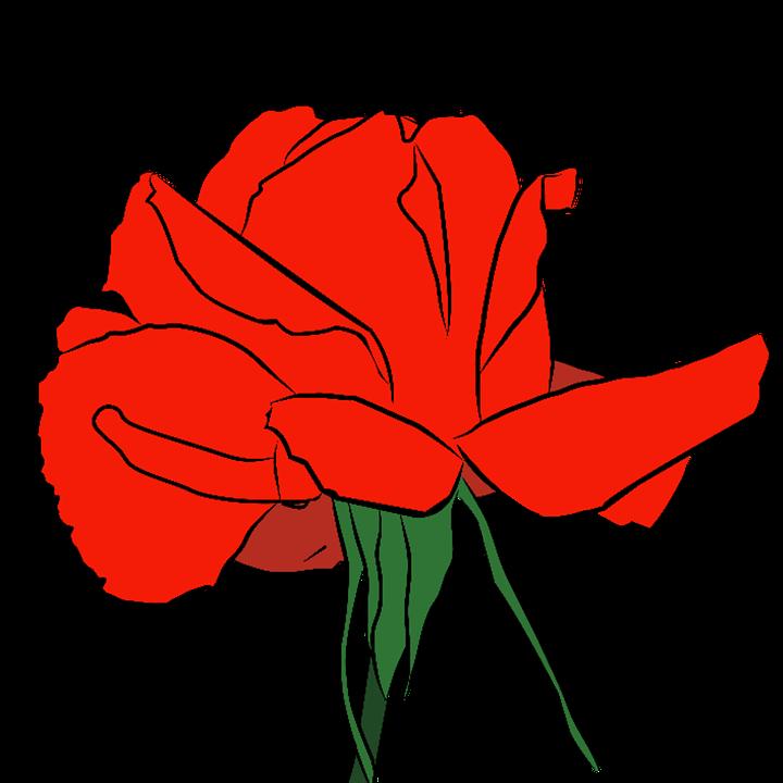 Rose, Red Rose, Mawar, Flower, Bunga