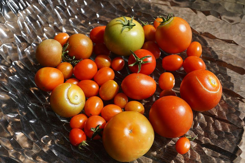Tomatoes, Vegetables, Garden, Rosemary, Red, Yellow