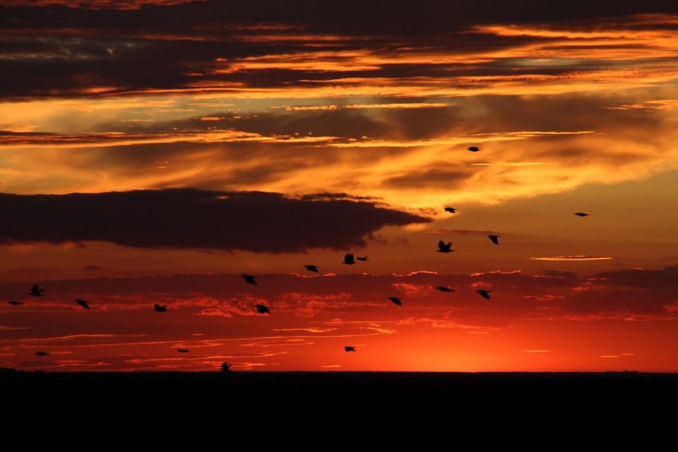 Sunset, Birds, Sky, Cloud, Red