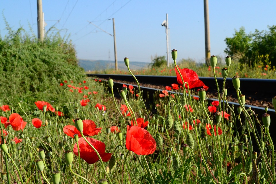 Railways, Flowers, Red, Train, Railroad, Transport