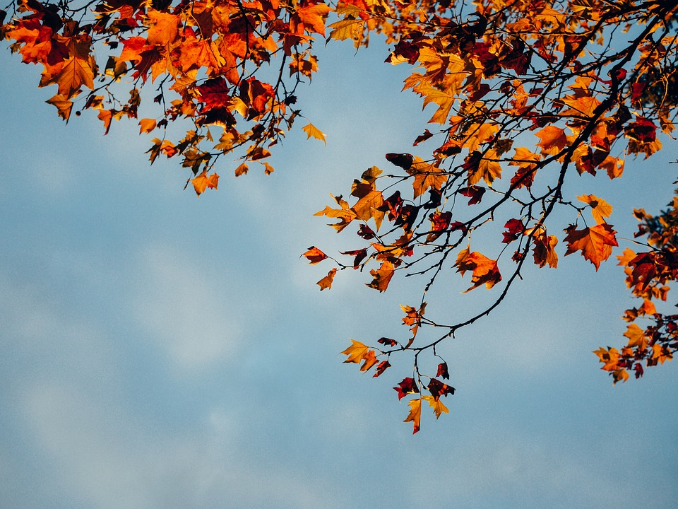 Red Leaves Branch Trees Fall Autumn Blue Sky