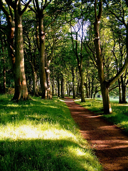 Trees, Red, Path, Park, Forest, Footpath, Walk, Summer
