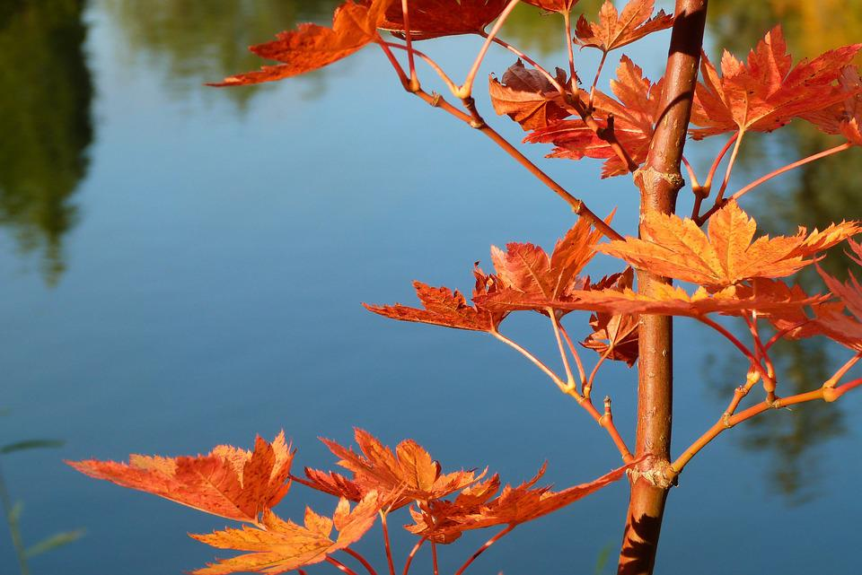 Leaves, Orange, Autumn, Fall, Water, Pond, Red, Golden