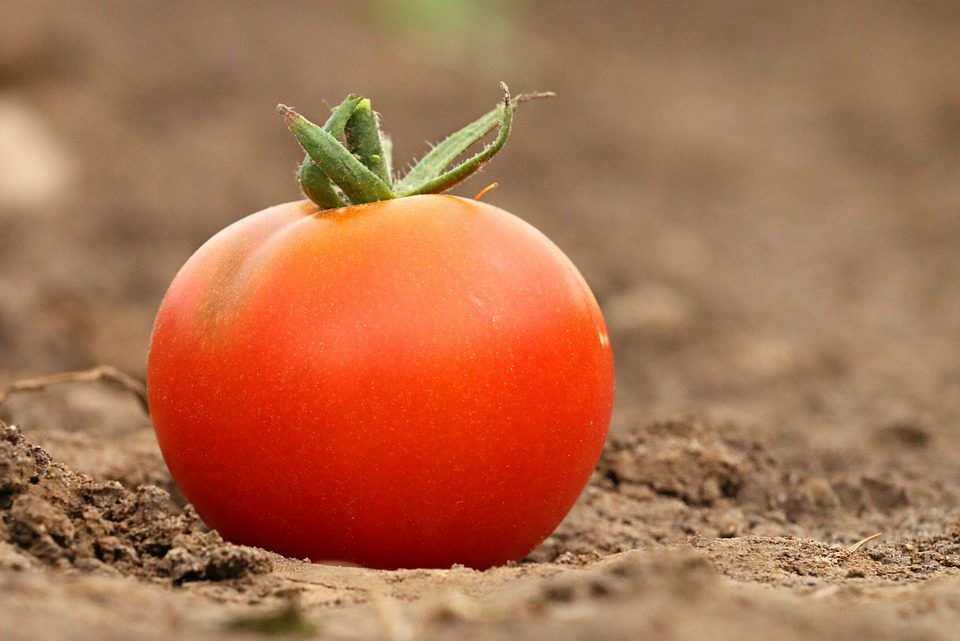 Tomato, Red, Diet, Weight, Loss Of Flesh, Health, Why
