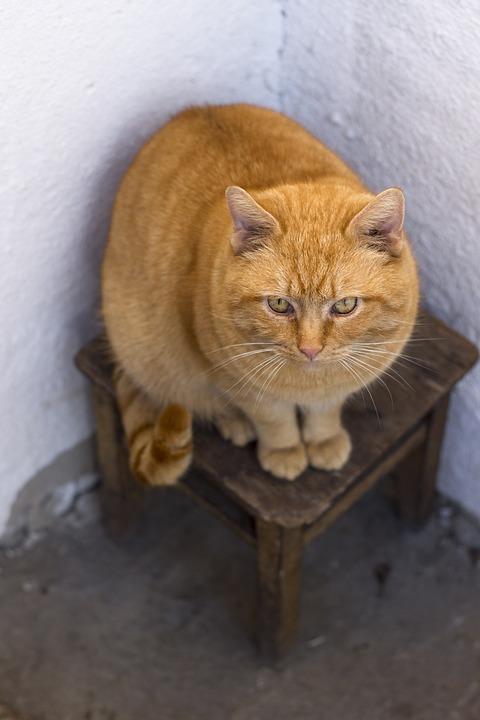 Cat, Redhead, Stool, Angle, White Wall, Pet