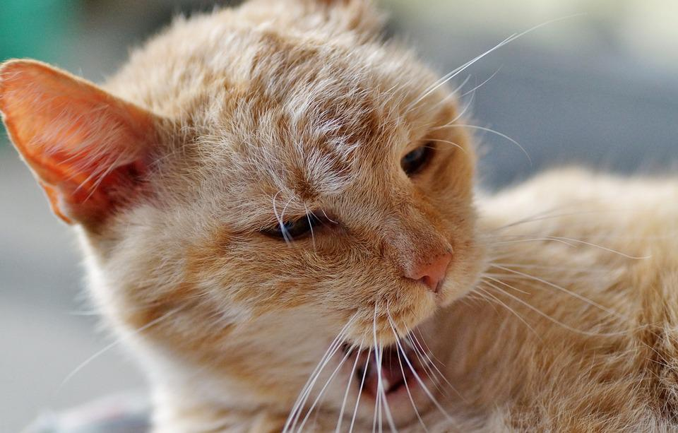 Cat, Sleeping, Tomcat, Redheaded, Rest, Sleep