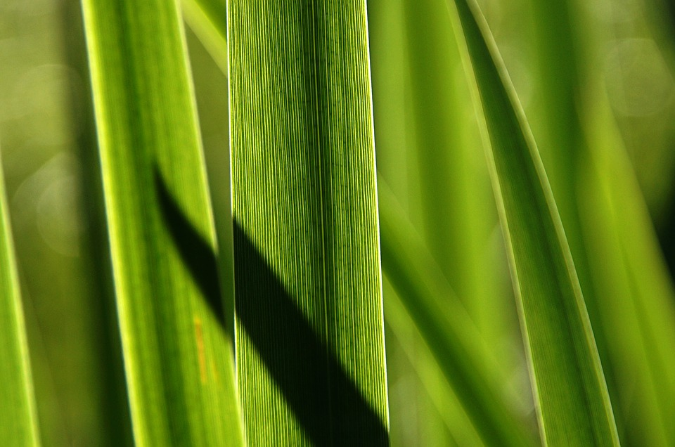 Grass, Reed, Shadow, Water, Pond Edge, Mood, Grasses