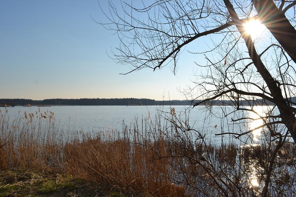 Pond, Sun, Water, Reed, Lausitz, Nature, Sky
