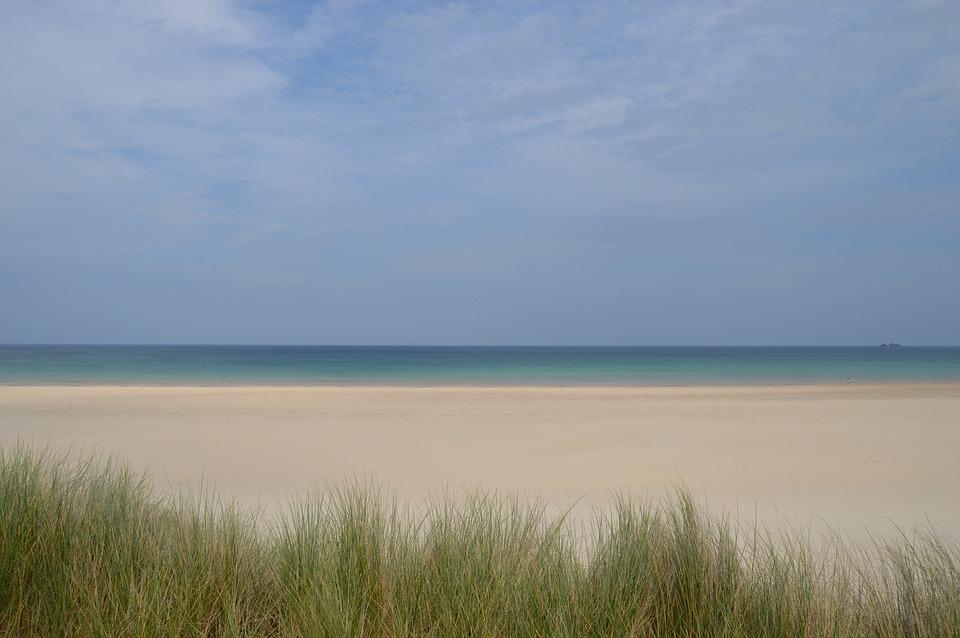 Beach, Porthkidney, Hayle, Cornwall, St Ives, Reeds