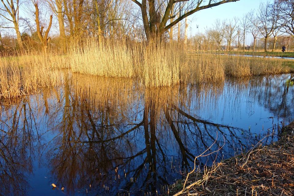 Pond, Water, Reeds, Marsh, Vegetation