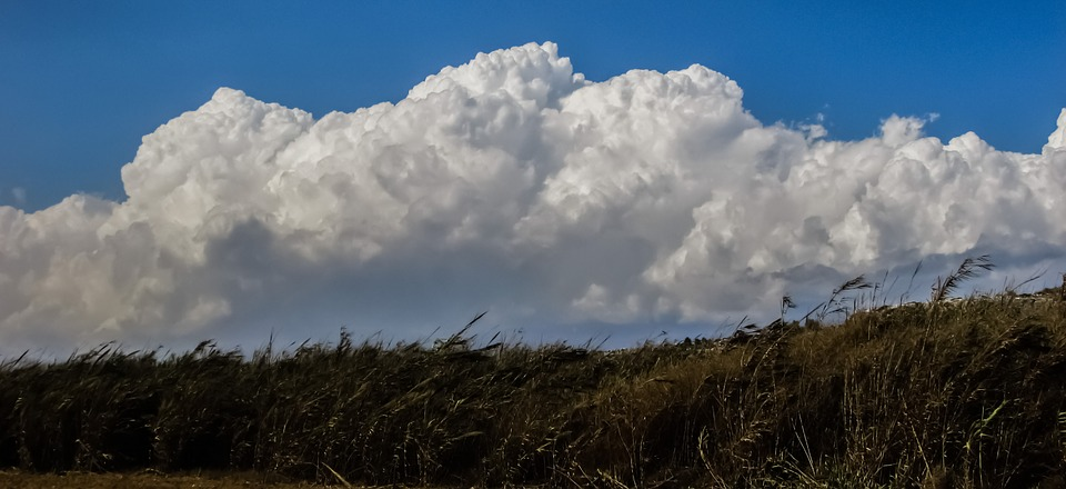 Reeds, Countryside, Clouds, Cumulus, White, Sky, Nature