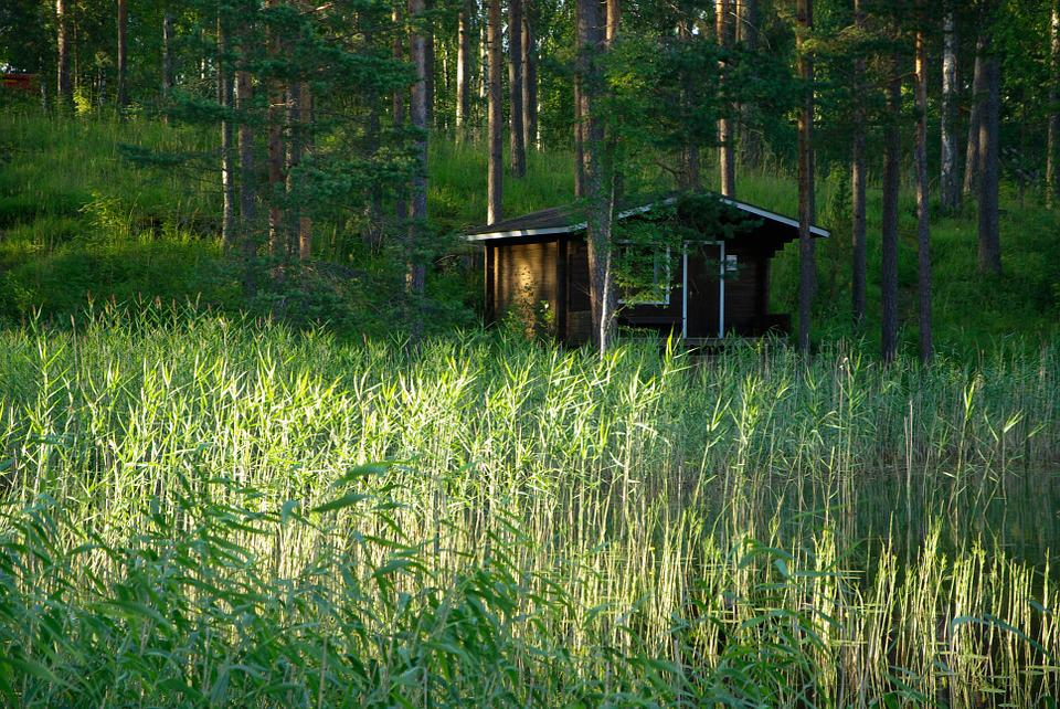 Finland, Wooden Chalet, Reeds, Forest Lake