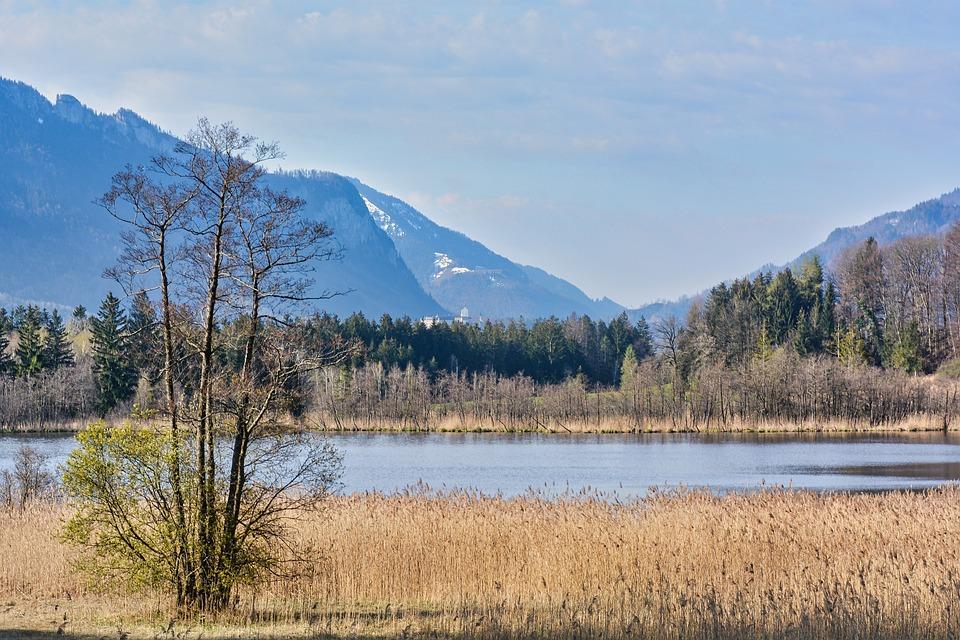 Lake, Mountains, Reeds, Reedy, Bank, Alps, Alpine