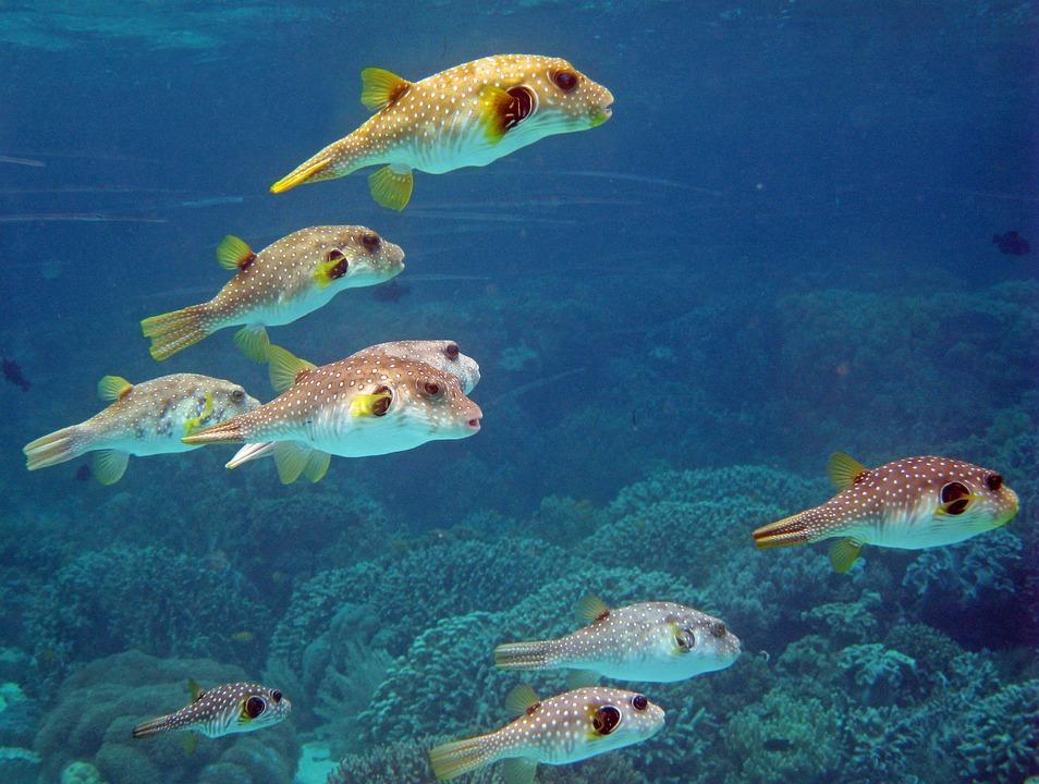 Indonesia, Underwater, Coral, Reef, Diving, Scuba