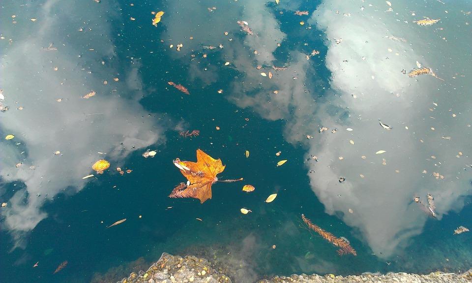 Leaf, Reflection, Water, Nature, Season, Lake, Drop